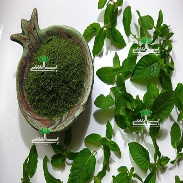 Export Dried Mint