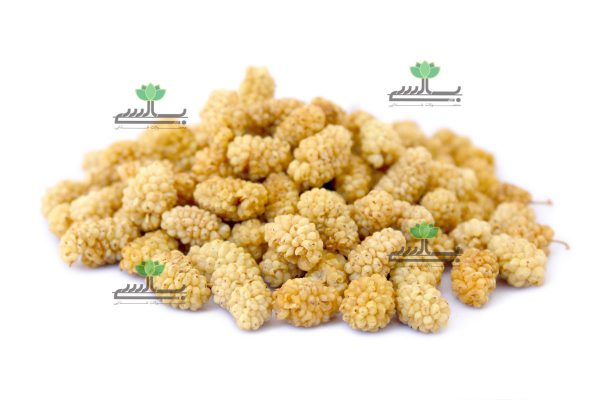 Export Dried White Mulberry